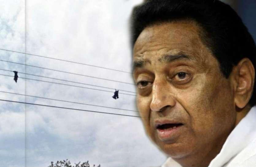 मध्यप्रदेश में चमगादड़ों के कारण हो रही बिजली कटौती, मंत्री ने कहा- लोगों के घरों में बढ़े एसी भी जिम्मेदार