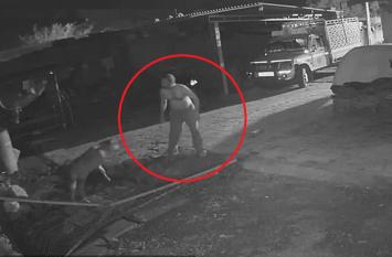 Lion Attack: शेर बछड़े को बनाने ही वाला था अपना निवाला, तभी इस शख्स ने दिखाई ऐसी दिलेरी वीडियो हुआ वायरल