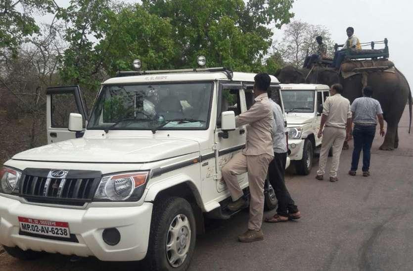 तेंदुए ने रेस्क्यू ऑपरेशन में खूब छकाया, पर हाथ नहीं आया, चार को पहुंचाया अस्पताल