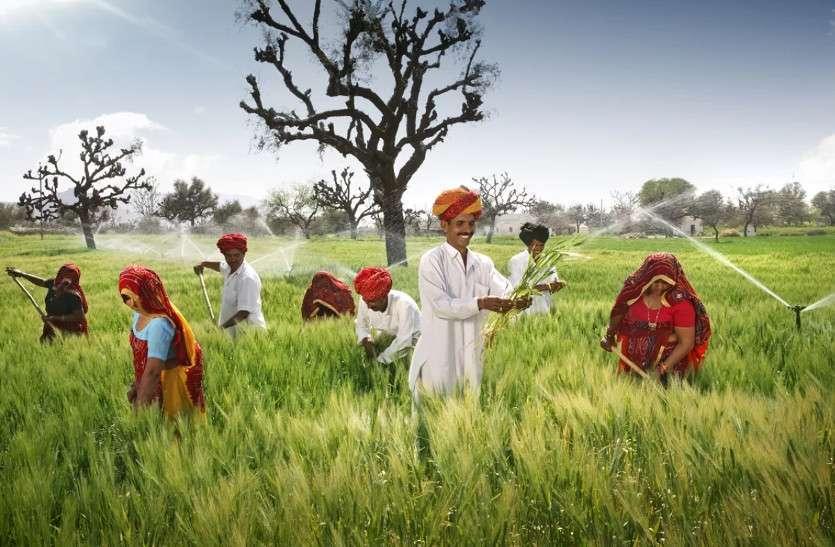 किसानों के लिए खुशखबरी, एक ही सीजन में हुई सरसों की रिकार्ड खरीद, फसल खरीदी की अवधि बढ़ाई