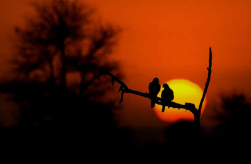 21 जून से दक्षिणायन में सूर्य, नहीं होंगे शुभ कार्य