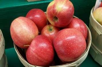 आयात शुल्क बढ़ने के बाद बाजार से नदारद हुए अमरीकी सेब, इतने बढ़े भाव