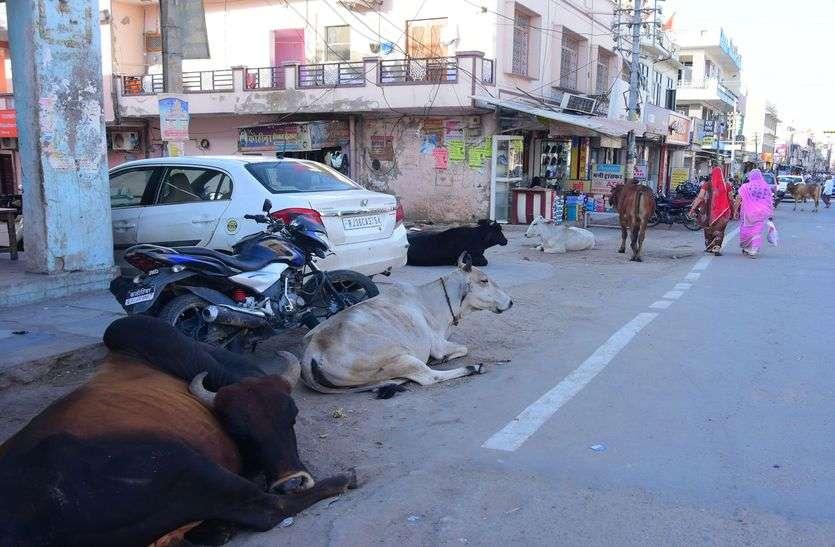 किशनगढ़ के बाजारों से मवेशियों को पकड़ेगी गाय गैंग