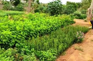 plantation. राणोली नर्सरी में सवा लाख पौधे तैयार