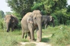 Elephant Attack : सामने इस रूप में खड़ी थी मौत, देखती रही महिला, पर चाहकर भी बचा नहीं सकी जान