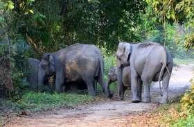 जान की बाजी लगाकर लीला और राजू लड़ेंगे हाथियों से, अधिकारियों ने दिए कड़े निर्देश