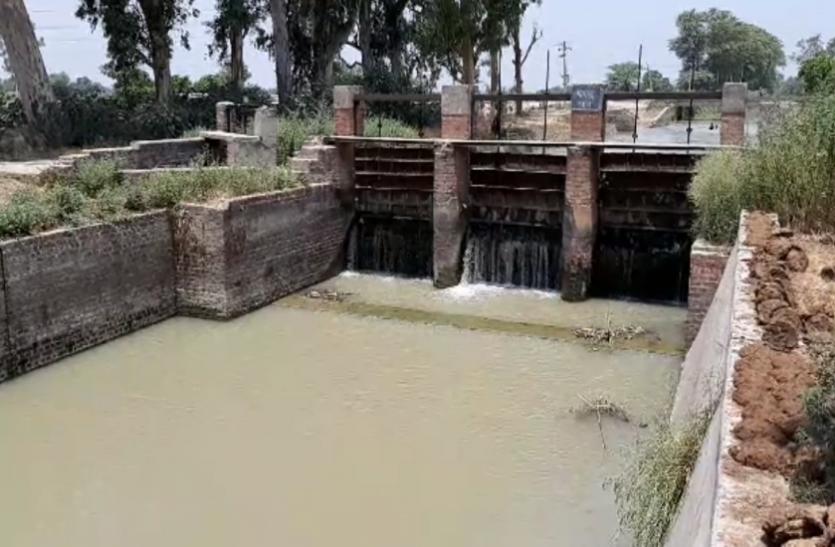 पड़ताल: हजारों किसानों को फसल सूखने का डर, अधिकारी बोले- चोरी हो रहा नहर का पानी
