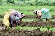 प्री मानसून की अच्छी बारिश होने के साथ ही धरतीपुत्र जुटे बुवाई में, 32 हजार हेक्टेयर पर खरीफ फसल की बुवाई पूूरी