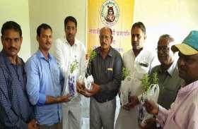 तुलसी के 50 हजार पौधों का वितरण 7 को