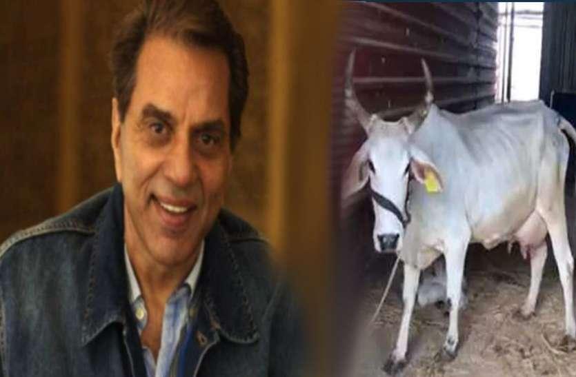 Dharmendra:- धर्मेंद्र ले रहे प्रकृति का लुत्फ, बोले डिप्रेशन को डिप्रेशन दो