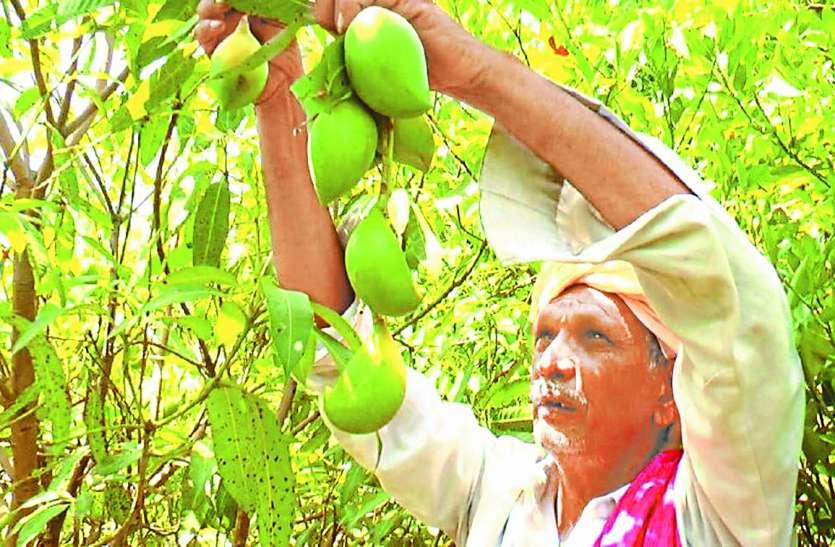 जज्बा ऐसा की बंजर जमीन पर फैला दी हरियाली: अब आम के पौधे लगाने की प्रशासन ने दी मंजूरी