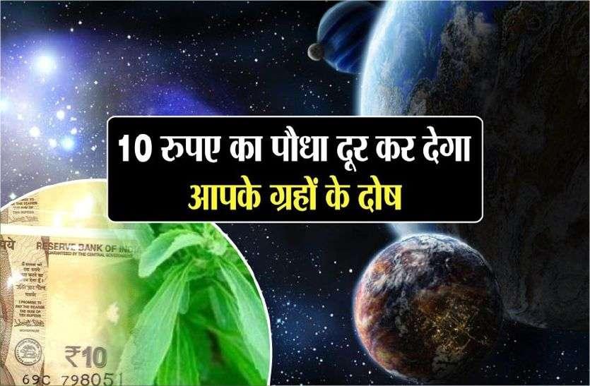 सिर्फ दस रुपए कीमत का एक पौधा दूर करेगा आपके ग्रह के दोष दूर
