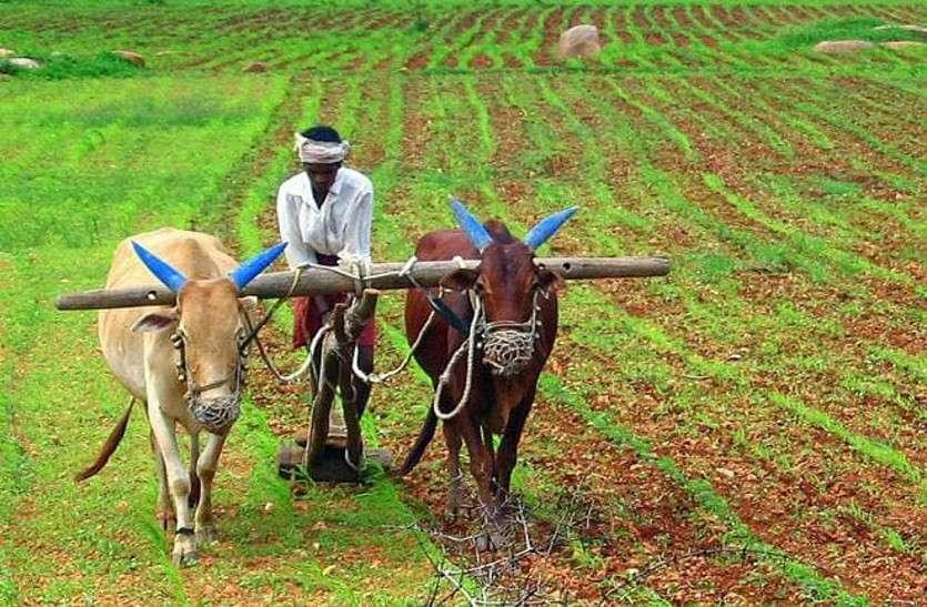 किसानों का तिलहन से मोह भंग, तीन गुना बढ़ा दलहनी फसलों का रकबा