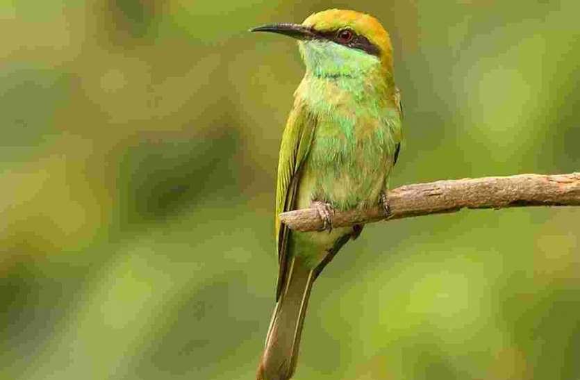 बारिश से मौसम सुहाना, जंगल से बाहर भी दिखने लगे कई जीव