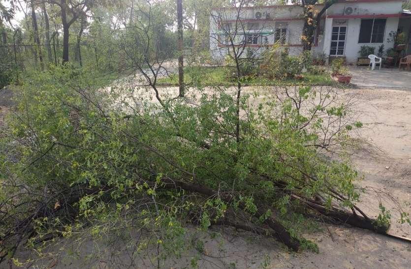 न्यायिक मजिस्ट्रेट के बंगले से चंदन के पेड़ काट ले गए चोर