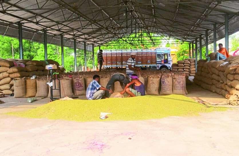 वैकल्पिक खेती की उपज मूंग का हो रहा बंपर उत्पादन, दो गुना है रेट
