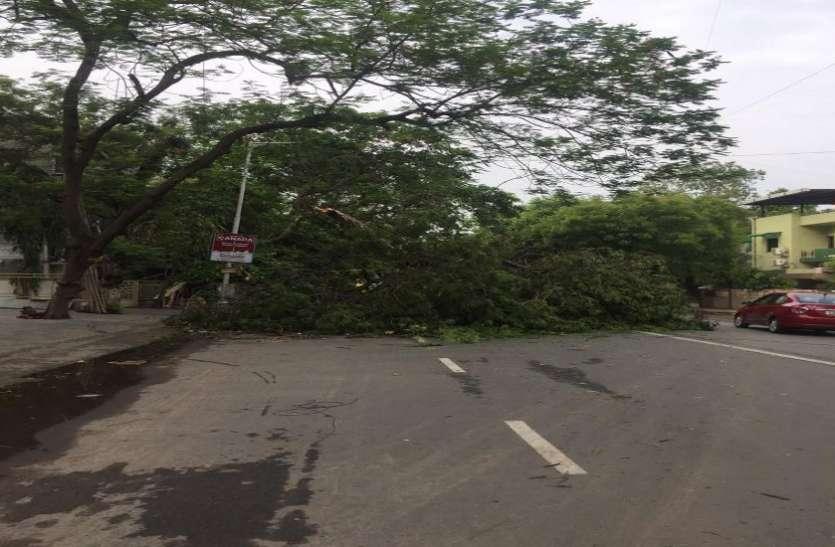 शहर में एक घंटे में ही उखड़ गए 183 वृक्ष