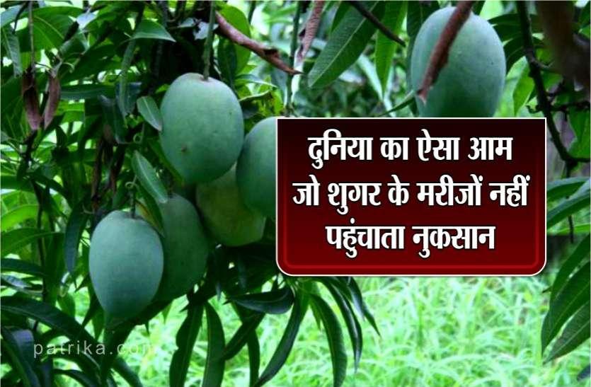 शुगर फ्री आम: मध्य प्रदेश के आम की दुनिया है कायल, डायबिटीज के मरीजों के लिए है फायदेमंद
