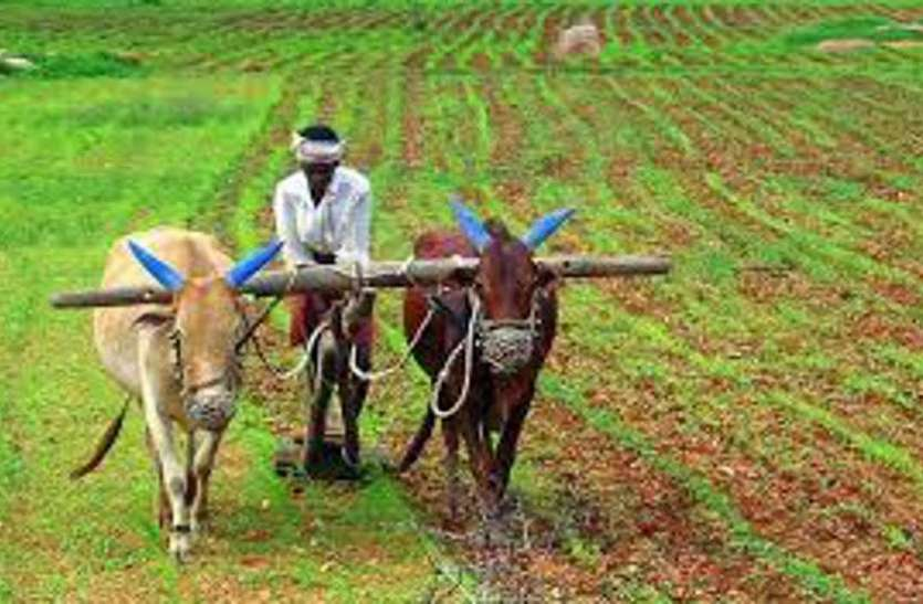 किसानों को मिल रहे महंगे दामों में बीज, किसानों के माथे पर चिंता की लकीरे उभरी