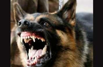 अगर कुत्ते ने काट लिया है तो भगवान भरोसे है आपकी जान, नहीं है एंटी रैबीज वैक्सीन