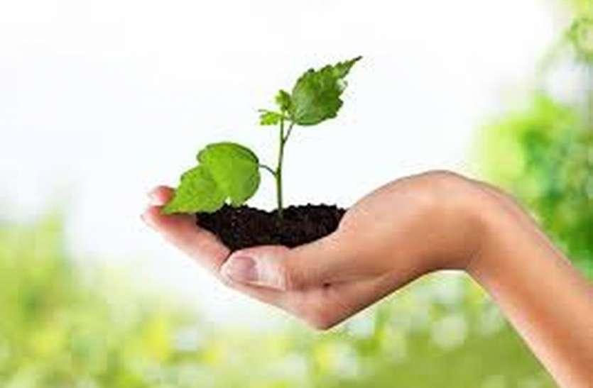 ब्रजभूमि में लगाएंगे हरे-भरे पौधे