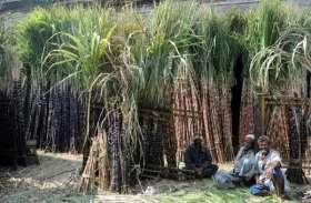 पूर्वांचल के गन्ना किसानों के लिए बुरी खबर, तेजी से पसर रहा कैंसर, 30 फीसदी तक फसल बर्बाद