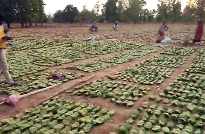 दो गांवों के तेंदूपत्ता श्रमिकों की व्यथा, एक माह से अटकी है 500 श्रमिकों की मजदूरी