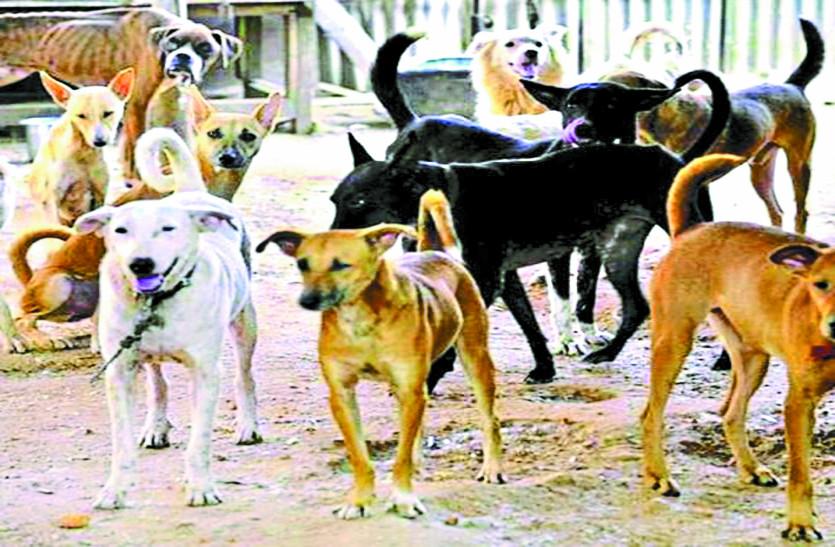 शहर में बढ़ रही आवारा कुत्तों की संख्या, मासूम बच्चों पर कर रहे हमला