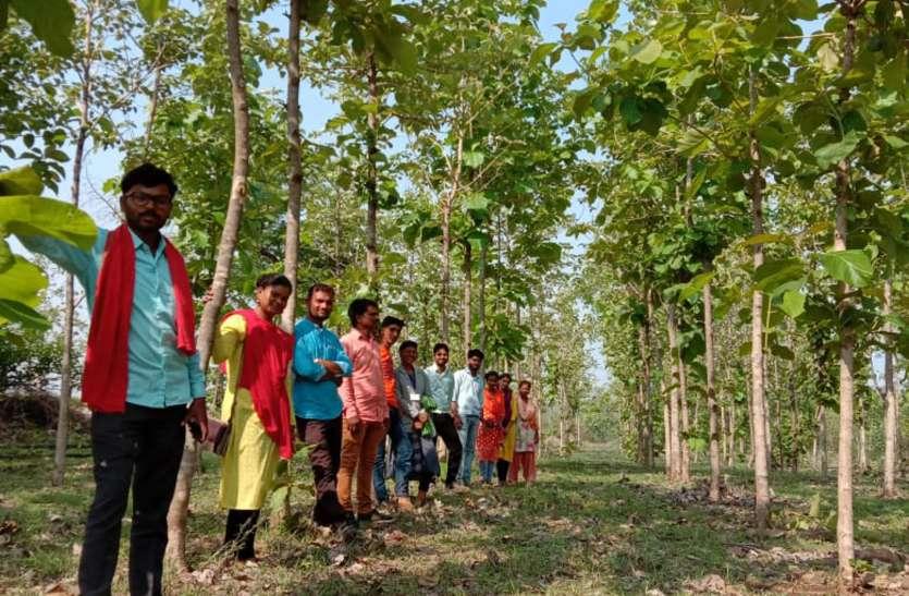 पर्यावरण संरक्षण के लिए प्रेरणा बन रहा किसान, डेढ़ एकड़ खेत में 12 सौ पौधे लगाकर दिया संदेश