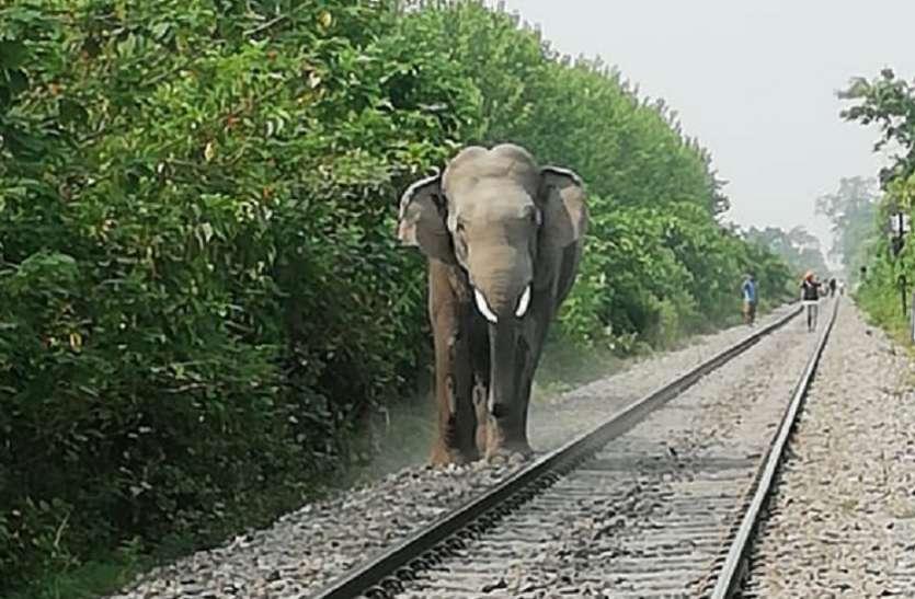 रामपुर: नेपाल से आए हाथियों को छेड़ा तो युवक का हुआ यह हाल