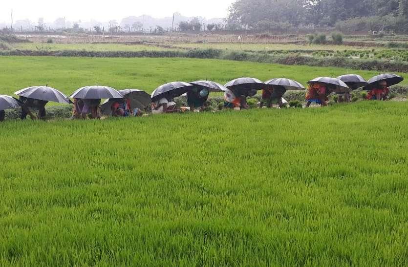 Weather : मानसून के दस्तक के साथ ही खेती-किसानी में जुटे किसान, Photo देख हो जाएगा दिल खुश