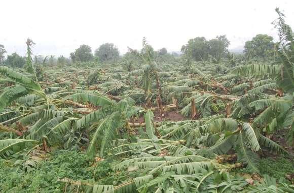 पेड़ गिरने से 10 घंटे प्रभावित रहा इंदौर-इच्छापुर हाईवे