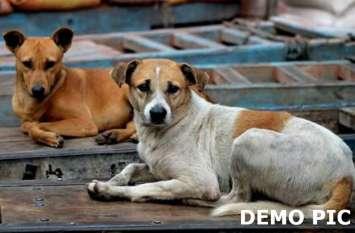 कुत्ते की वफादारी बनी मिसाल, जान देकर बचायी मालिक के बेटे की जान