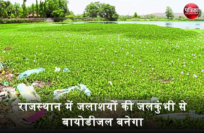 प्रदूषण फैलाने वाली जलकुंभी से अब राजस्थान में बनेगा बायोडीजल, वेस्ट मटेरियल कागज बनाने में आएगा काम