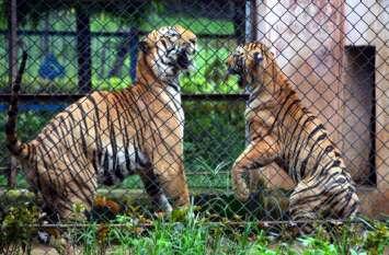 छत्तीसगढ़ के इस गार्डन में बेखौफ घूमते हैं शेर, हर साल लाखों पर्यटक आते हैं देखने, देखिए फोटो