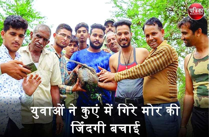 बांसवाड़ा : दो दिन पहले कुएं में गिरा तड़प रहा था मोर, युवाओं ने कुएं में उतरकर बचाई जान
