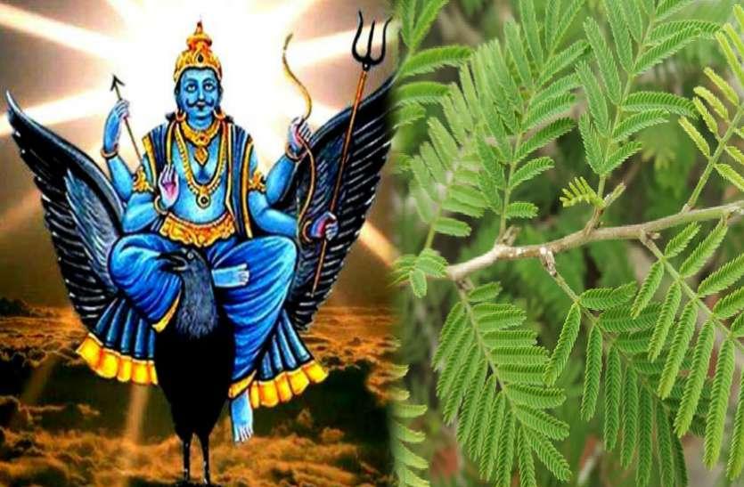 घर में लगा लें यह पौधा, शनिदेव की कृपा से कई समस्याओं से मिलेगा छुटकारा