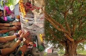 दिन के अनुसार करें इन पेड़ों की पूजा, धन प्राप्ति समेत होंगे ये 10 फायदे