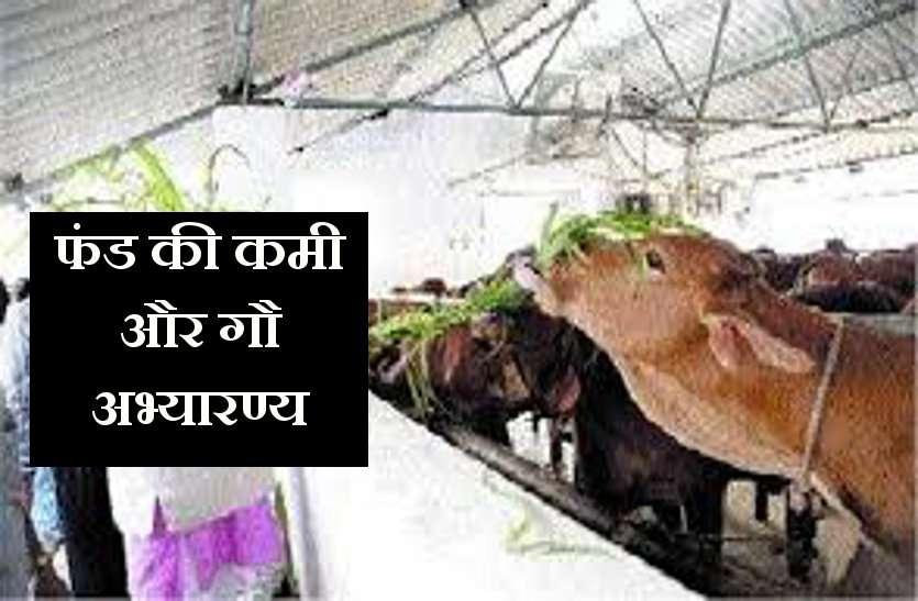 बेसहारा गायों को सहारा देने के लिए बनाए गए गौ अभ्यारण्य को अब निजी हाथों का सहारा