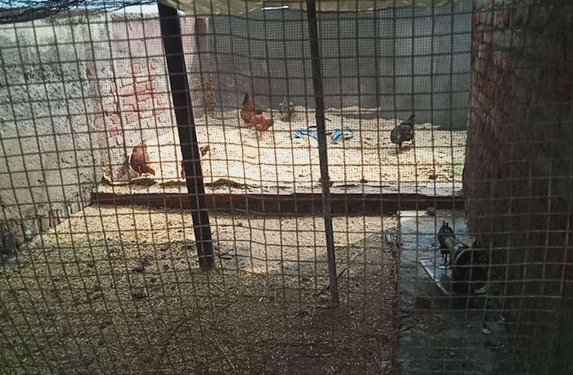 Corruption in Firozabad गौशाला की अनुमति लेकर लेकर खोल लिया मुर्गी फार्म, पढ़िए पत्रिका की स्पेशल रिपोर्ट, देखें वीडियो
