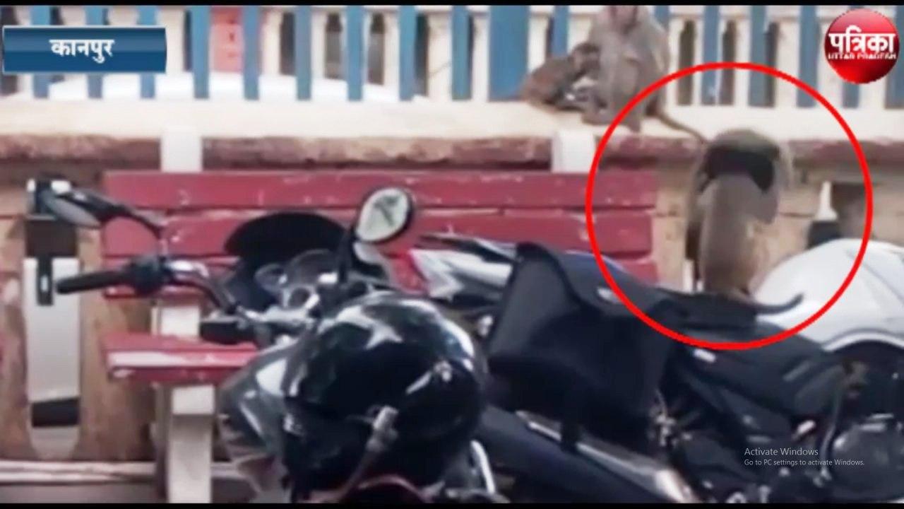 जीआरपी कांस्टेबल की टोपी लगा बंदर रेलवे स्टेशन की कर रहा पहरेदारी !