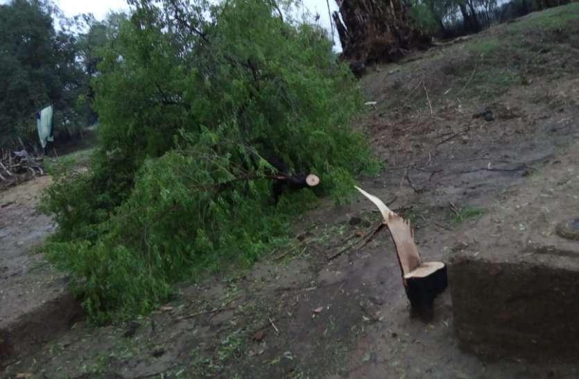 इत्र बनाने के लिए चंदन के पेड़ों की हत्या, जानिए क्या है घटना
