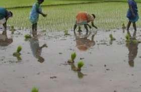 इस बार मानसून देख झूमे किसान, इन फसलों में होगी बंपर पैदावार, देखें वीडियो