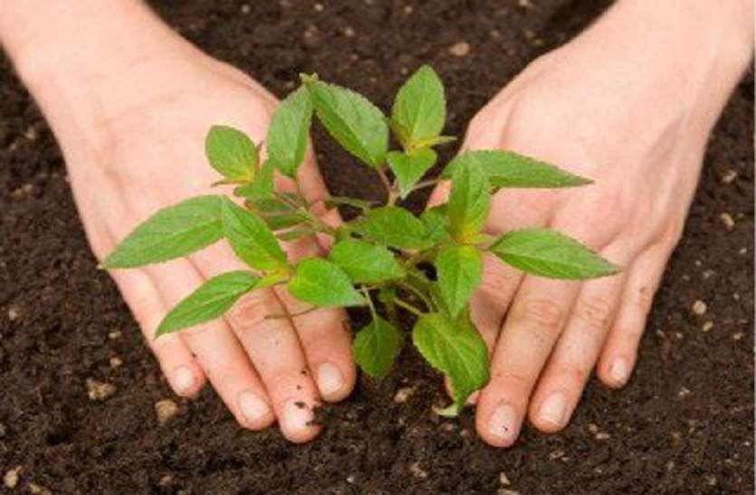 मेवाड़-वागड़ में इस बार रोपेंगे आधे पौधे, आठ वर्ष पूरे होने पर जैव विविधता योजना हुई बंद