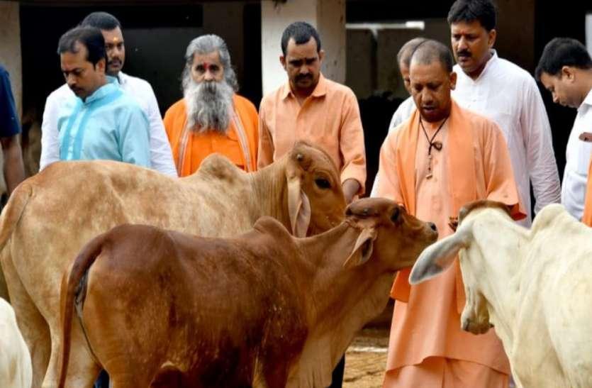 आवारा गौवंश की देखभाल पर किसानों को हर माह मिलेंगे 900 रुपए