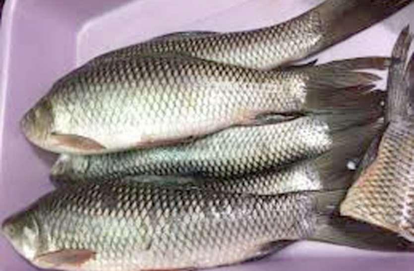कानपुर की मछलियां पड़ीं बीमार, खाने वालों के दिल और दिमाग को हो रहा नुकसान