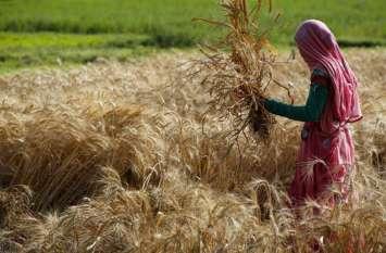 किसान कर्जमाफी को लेकर सरकार उठा रही बड़ा कदम, अब फर्जी लोन लेने वालों पर गिरेगी गाज