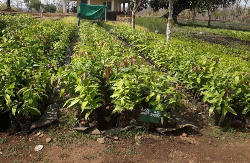 नर्सरी में जैविक खाद से तैयार किए 30 लाख पौधे