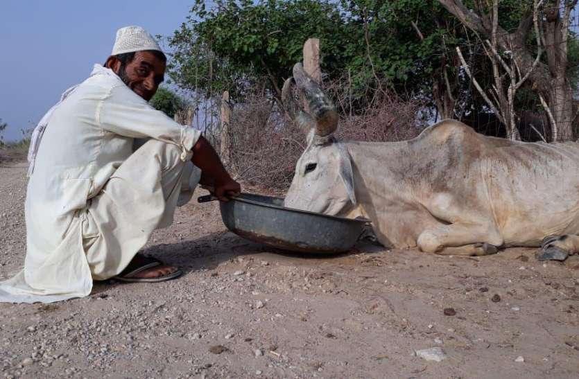 शिया- सुन्नी बुरखा पहने महिलाएं और पुरुष करेंगे गऊ पूजन