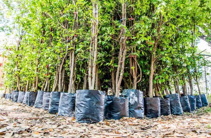 शहर में भी चयनित की जगह, हरियाली बढ़ाने 22 स्थानों पर रोपे जाएंगे 40 हजार पौधे